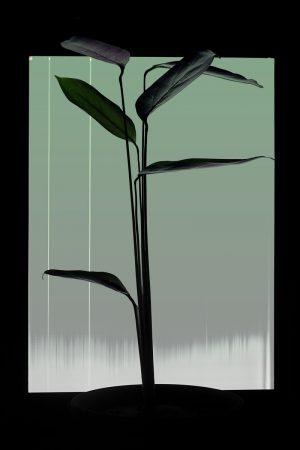 Expérimentation de photographie de plantes